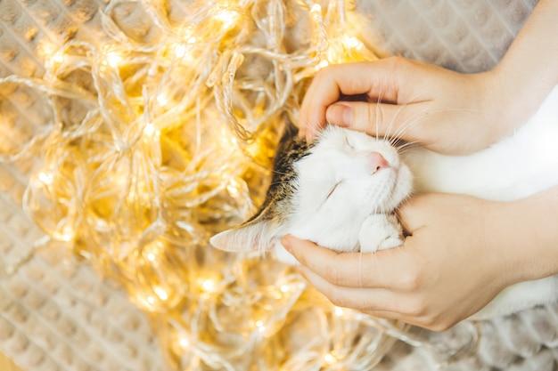 Weiße getigerte katze im licht einer girlande, komfort. mädchen, das eine zufriedene katze streichelt