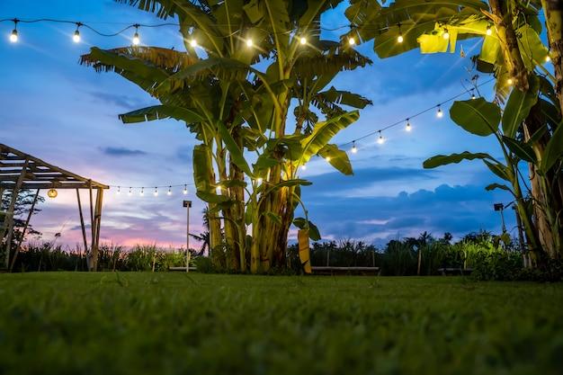 Weiße glühbirnen hängen an einer schnur zwischen palmen in einem grünen rasengarten