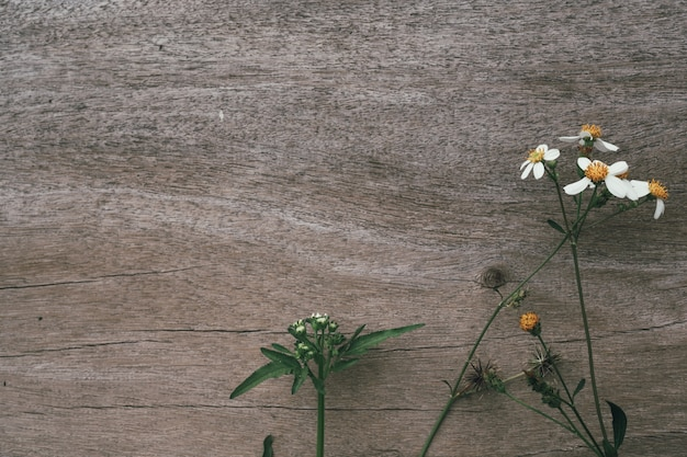 Weiße grasblumen mit braunem holz.
