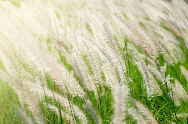Weiße grasblumen mit unscharfem hintergrund