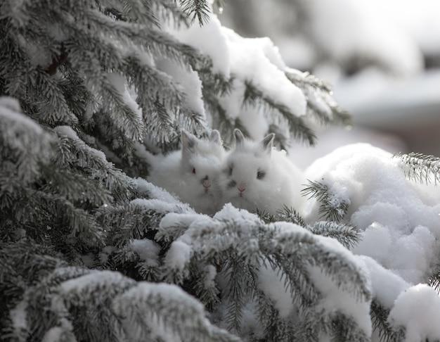 Weiße hasen im schnee