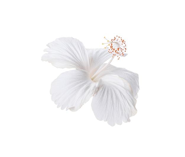 Weiße hibiskusblume lokalisiert auf weißem hintergrund