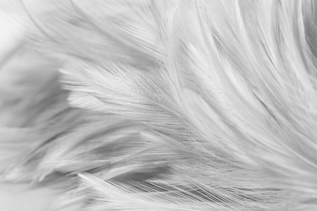 Weiße hühnerfedern im weichen und unschärfearthintergrund