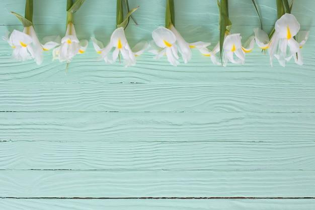 Weiße iris auf grüner holzoberfläche