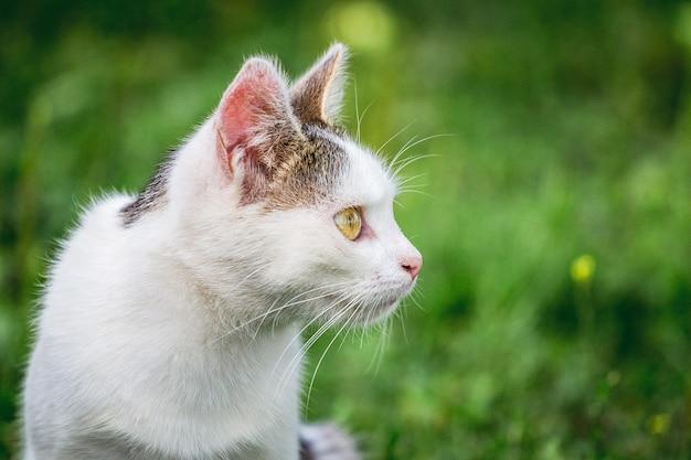 Weiße junge katze auf dem hintergrund des grünen grases, das weg schaut_