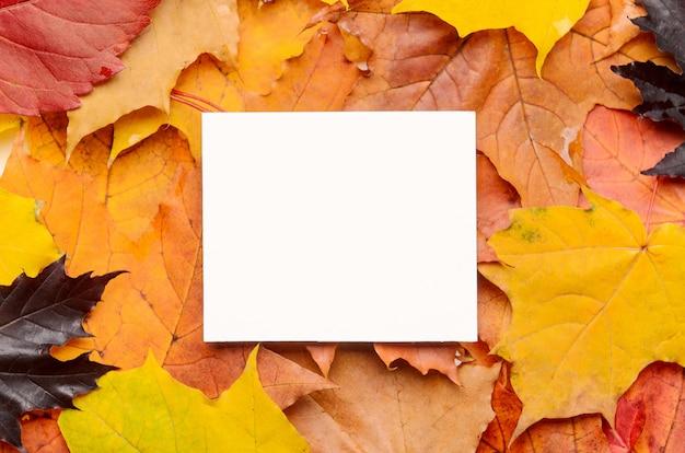 Weiße karte für glückwünsche und aufschriften auf farbigem hintergrund des roten, gelben, purpurroten herbstlaubs