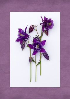 Weiße karte mit leuchtenden frühlingsblumen auf lila hintergrund