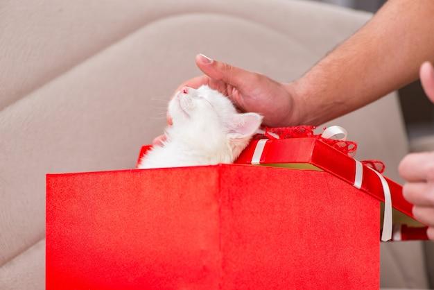 Weiße katze als geschenk im roten kasten
