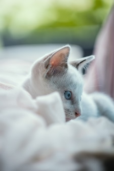 Weiße katze auf dem bett