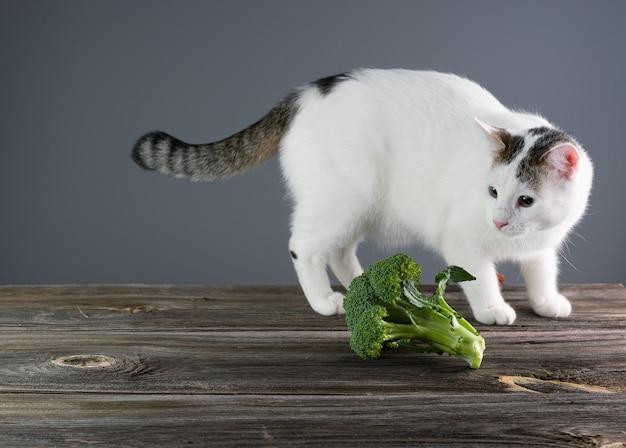 Weiße katze auf tisch interessiert an brokkoli