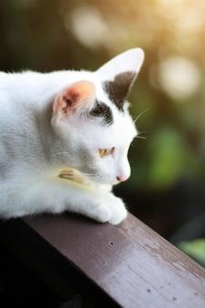 Weiße katze des kätzchens, die sitzt und auf dem fenster mit sonnenlicht und natur genießen