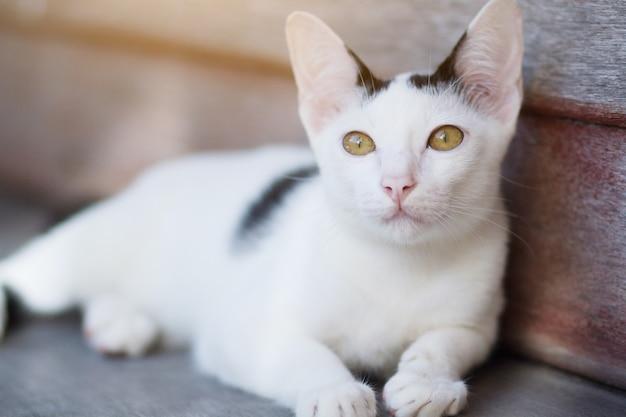 Weiße katze des kätzchens sitzend und genießen sie auf hölzerner terrasse mit sonnenlicht