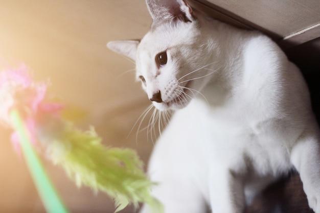 Weiße katze des kätzchens und genießen mit den spielwaren