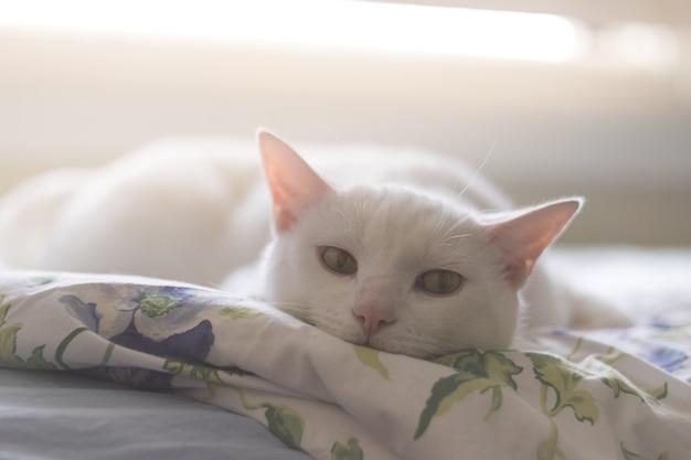 Weiße katze des porträts lag auf flaumigem bett im raum