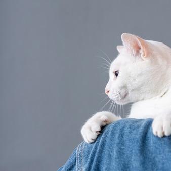Weiße katze, die auf frauenschulter sitzt