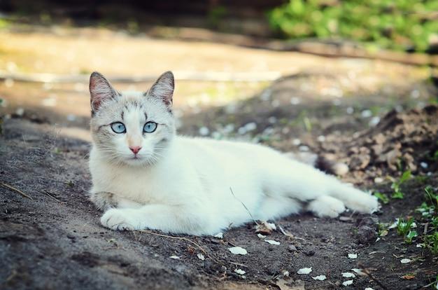Weiße katze, die im garten liegt
