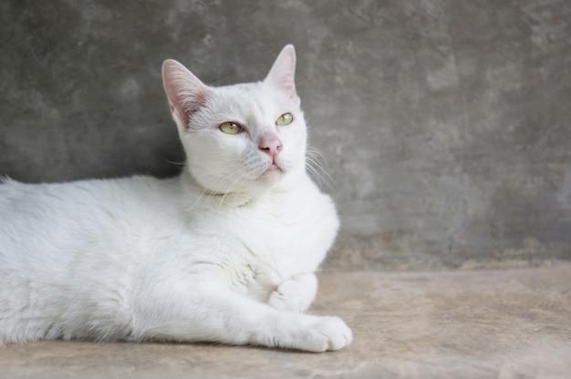 Weiße katze, die im raum, weichzeichnung liegt.