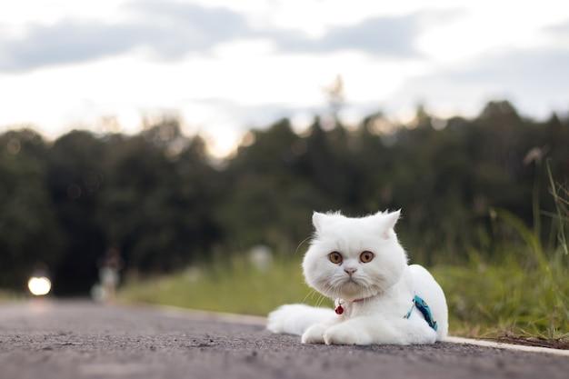 Weiße katze ducken sich auf straße unscharfen hintergrund