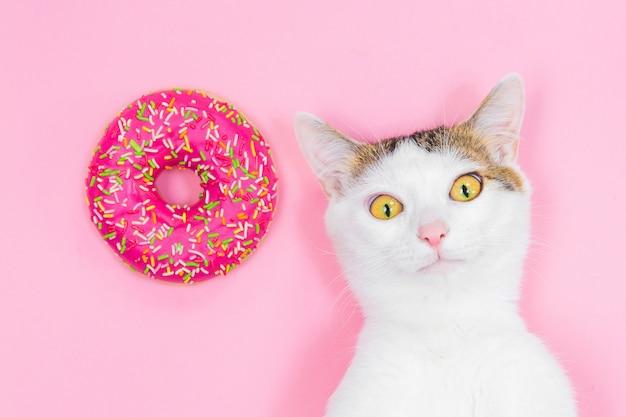 Weiße katze gestreift auf einem rosa hintergrund, lustige katze