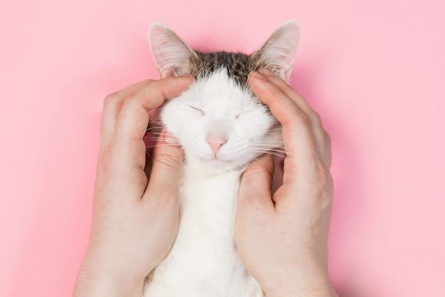Weiße katze gestreifte, lustige katze