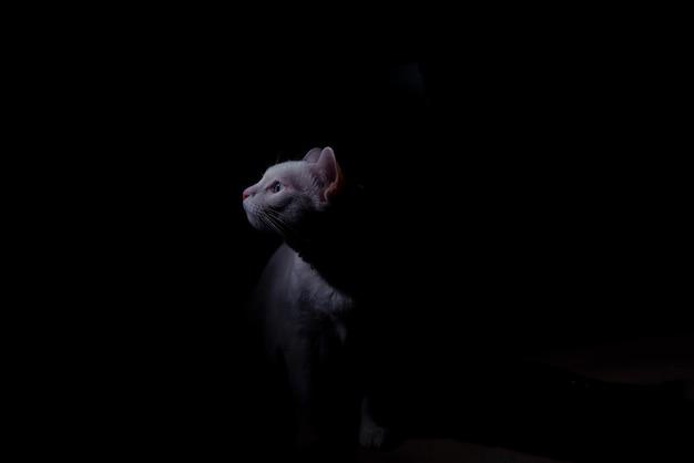 Weiße katze im dunklen raumkonzept