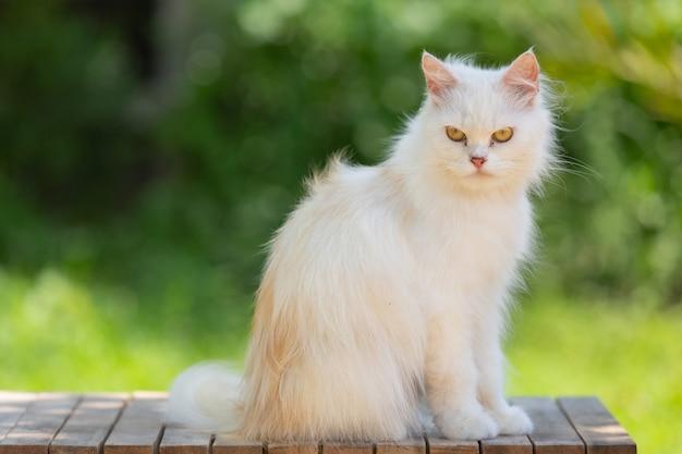 Weiße katze im garten