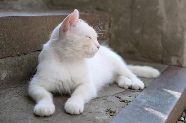 Weiße katze legen nieder und schlafen auf konkreter treppe draußen