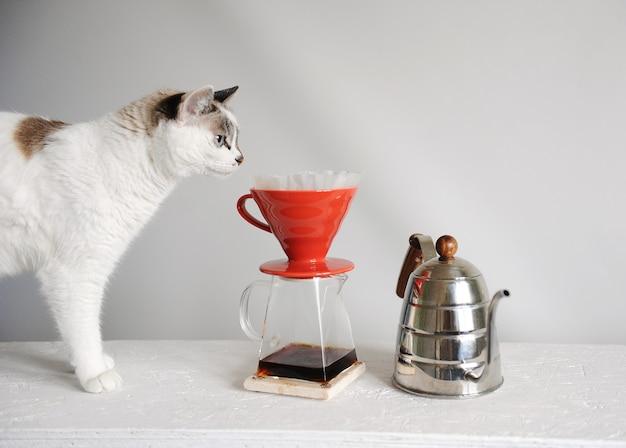 Weiße katze und brühen von tropfkaffee in rot gießen über. wasserkocher schwanenhals. weißer hintergrund.
