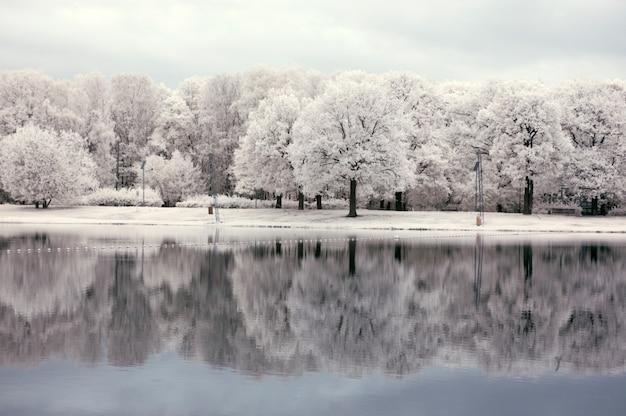 Weiße landschaft mit wald nahe dem see