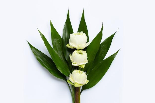Weiße lotusblume mit grünen blättern. draufsicht