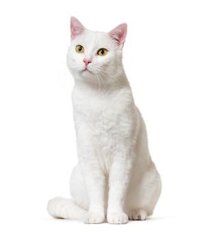 Weiße mischlingskatze, isoliert auf weiß