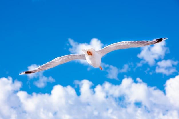 Weiße möwe, die im himmel möwe auf blauem himmelhintergrund schwebt