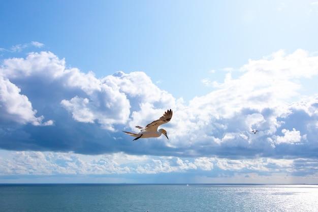 Weiße möwe fliegt am sonnigen himmel und einige flauschige wolken
