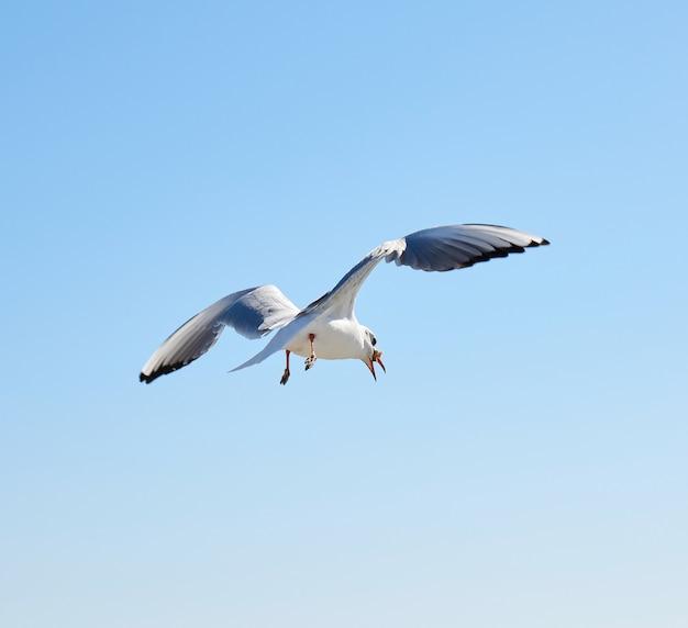 Weiße möwe fliegt in den himmel