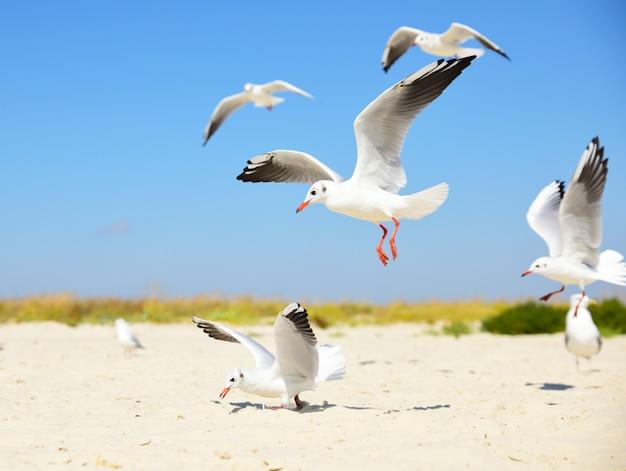 Weiße möwen am strand