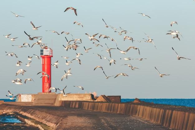 Weiße möwen fliegen gegen den roten leuchtturm