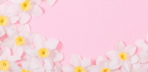 Weiße narzisse auf rosa papieroberfläche