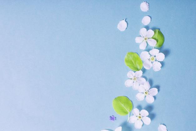Weiße narzissen- und kirschblüten auf blauer papieroberfläche