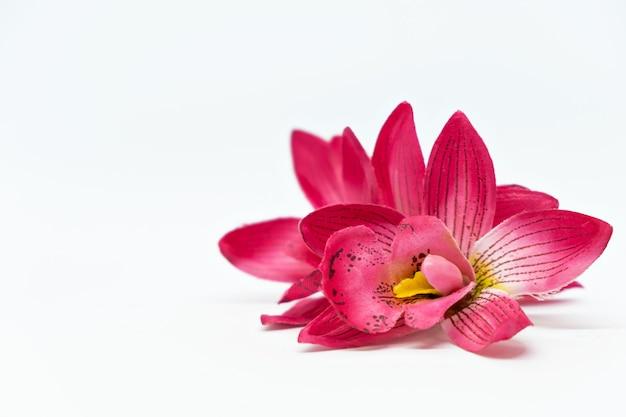 Weiße oberfläche mit rosa tropischer blumenorchidee frangipani verspottet spa-konzept