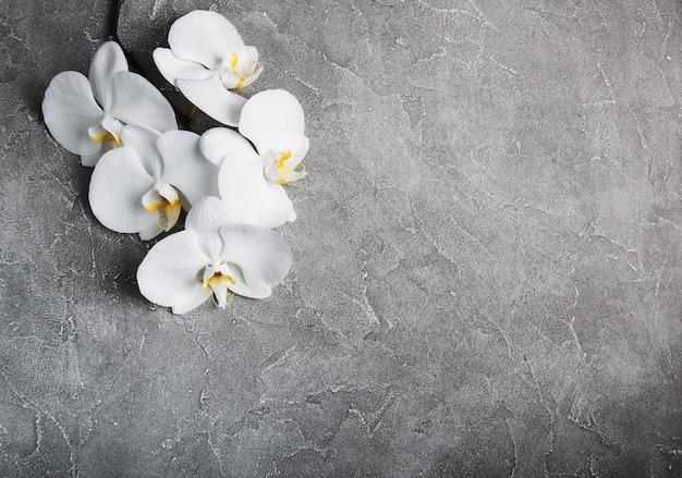 Weiße orchidee auf dem grauen stein