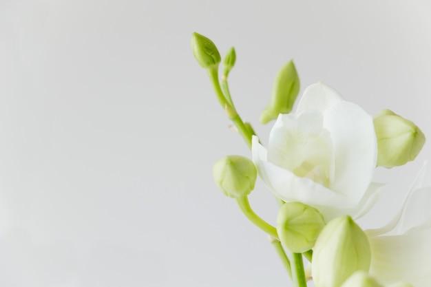 Weiße orchidee auf grauem farbhintergrund