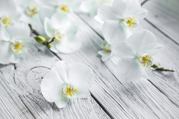 Weiße orchidee auf hölzernem hintergrund