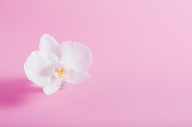 Weiße orchidee auf rosa hintergrund