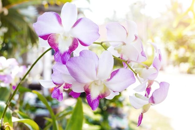 Weiße orchidee auf weißem blackbackground