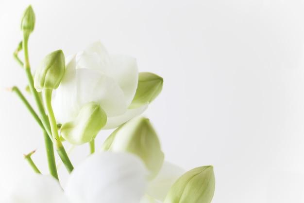 Weiße orchidee auf weißem hintergrund