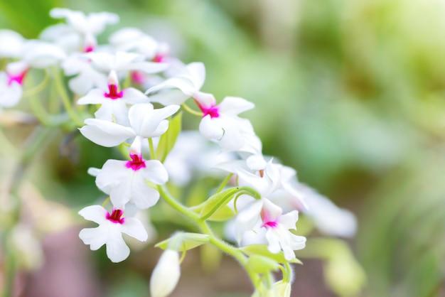 Weiße orchideen in einem wilden tropischen wald. schöne frühlingsblumen mit weichem grünem hintergrund