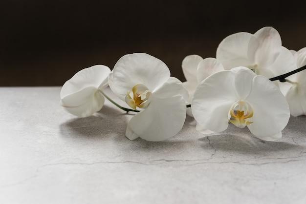Weiße orchideenblüten auf grauem hintergrund, spa-hintergrund mit kopierraum