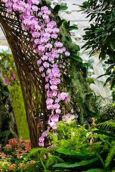 Weiße orchideenblumen auf dem baum