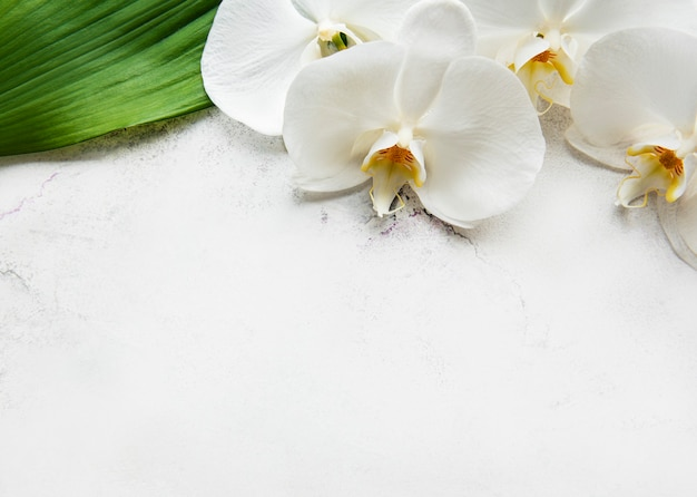 Weiße orchideenblumen auf einem weißen marmortisch