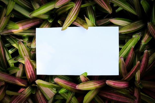 Weiße papierkarte auf grünem pflanzenhintergrund, anzeigenkonzept.